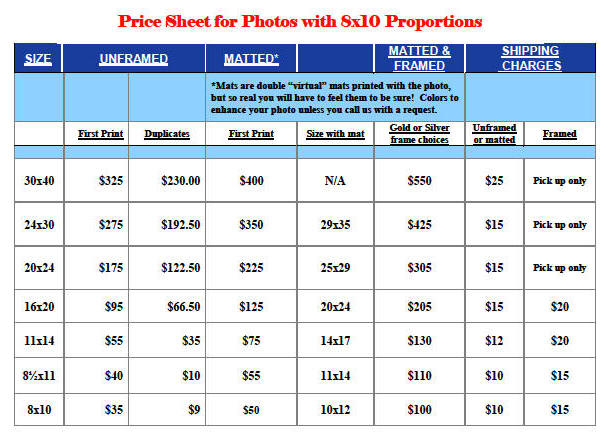 8x10 proportion prices