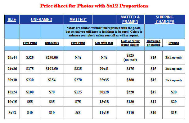 8x12 proportion prices