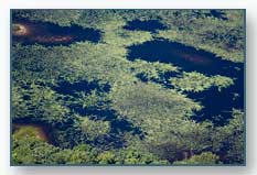 Wetland Patterns